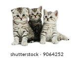 Kittens Family On White...