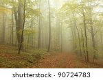 Autumn Beech Forest Surrounded...