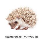 hedgehog isolate on white... | Shutterstock . vector #90790748