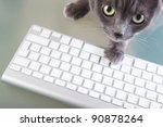 Stock photo cat typing on a keyboard 90878264
