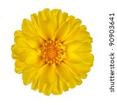 Yellow Dahlia Flower with Yellow Center Isolated on White Background - stock photo