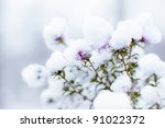 Flowers In Snow On Blurry...