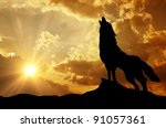 Wolf Howling At The Sunset