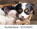 Stock photo puppy and kitten 91114247