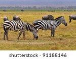zebras serengeti tanzania. the... | Shutterstock . vector #91188146