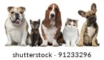 Stock photo group of cats and dogs in front of white background 91233296