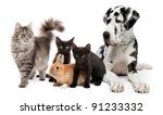 Stock photo group of cats and dogs and rabbit 91233332