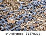 Hundreds Of Dead Kokanee Salmo...