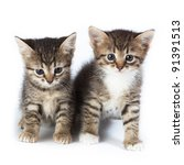 Stock photo kittens in studio against a white background 91391513