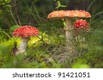 Gryb In The Woods. Red Amanita...