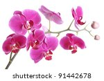 the branch of orchids on a...   Shutterstock . vector #91442678