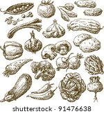 vegetables | Shutterstock .eps vector #91476638