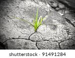 green plant growing from... | Shutterstock . vector #91491284