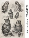Vintage Owls Types Drawing  ...