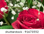 Stock photo close up of a red rose with fresh mist on its bloom 91673552