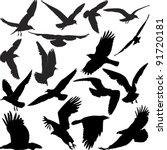 silhouette birds | Shutterstock .eps vector #91720181