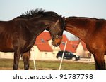 two brown horses playing with...   Shutterstock . vector #91787798