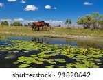 two horses on the edge of a... | Shutterstock . vector #91820642