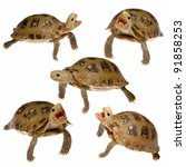animal turtle pet set isolated on white background - stock photo