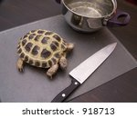 Complete The Turtle Soup