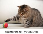 Stock photo playing cat 91983398