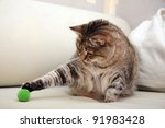 Stock photo playing cat 91983428