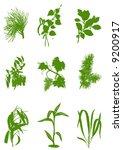 vector plant | Shutterstock .eps vector #9200917