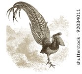 "Pheasant - vintage engraved illustration - ""Histoire naturelle"" by Buffon and Lacepe  ed. Alfred Mame - Tours 1881"