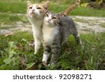 Two Kittens Leaning On Each...