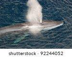 fin whale | Shutterstock . vector #92244052