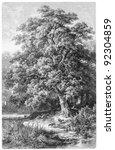 Oak   vintage illustration from ...