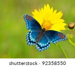 Stock photo red spotted purple admiral butterfly on a yellow coreopsis flower against green background 92358550