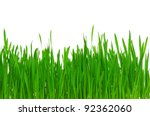 fresh green wheat grass... | Shutterstock . vector #92362060
