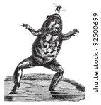 Toad  Bombinator Igneus   ...