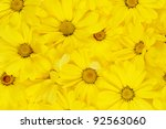background of yellow daisies.... | Shutterstock . vector #92563060