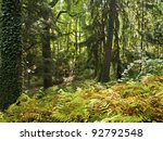 """""""Thick Forest"""" A green forest with late Summer ferns in Central New Jersey. - stock photo"""