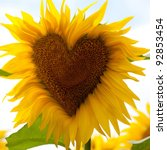 Sunflower head with a heart - stock photo