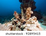 lost anchor in the red sea   Shutterstock . vector #92895415