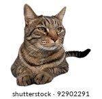 tabby cat | Shutterstock . vector #92902291