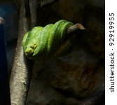 Green snake is sleeping on a...
