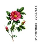 water color dogrose flowers | Shutterstock . vector #92927656