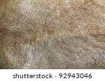 Lion Fur Background