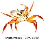 crab on white | Shutterstock . vector #92971840