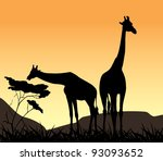 Two Giraffes On A Background O...