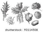 greek oak  quercus graeca   ... | Shutterstock .eps vector #93114508