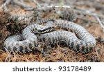 european adder  vipera berus ...   Shutterstock . vector #93178489