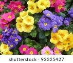colorful primula plants in... | Shutterstock . vector #93225427