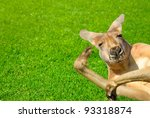 Humor Shot Of A Lazy Kangaroo...