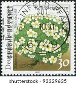 Small photo of GERMANY - CIRCA 1991: A stamp printed in Germany, is shown Schweizer Mannsschild (Androsace helvetica), circa 1991