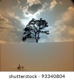 Tree Grows In Desert Scene